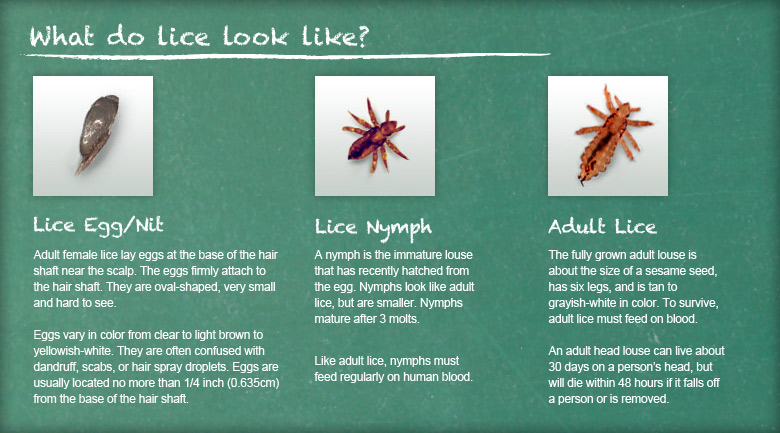 What do book lice look like 10